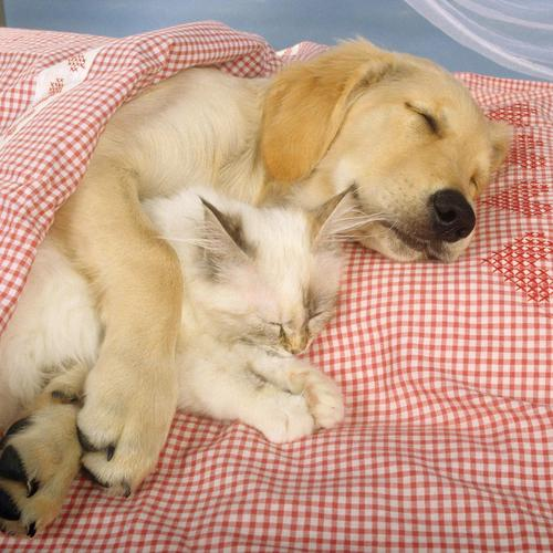 Dog hugs cat sleeping wallpaper
