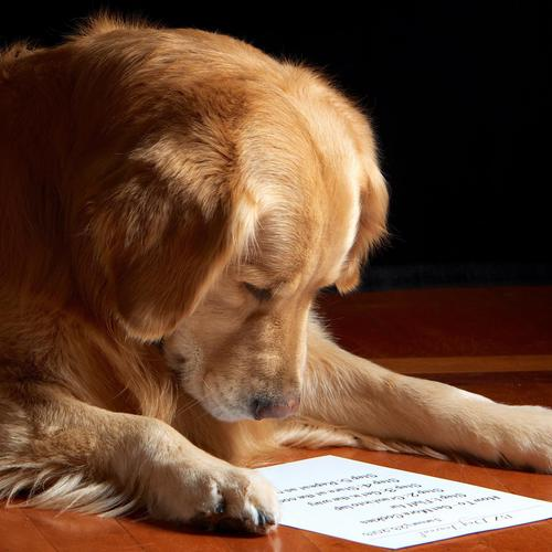 Dog reading letter wallpaper
