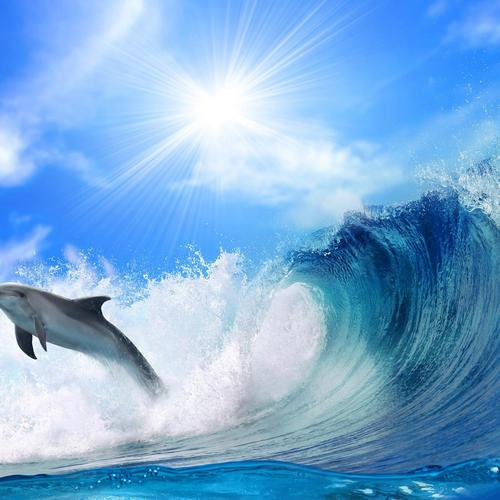Dolphin jumping over the wave wallpaper