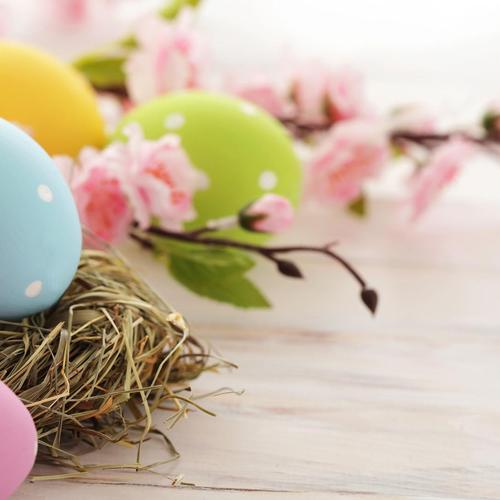 Easter Eggs Nest wallpaper