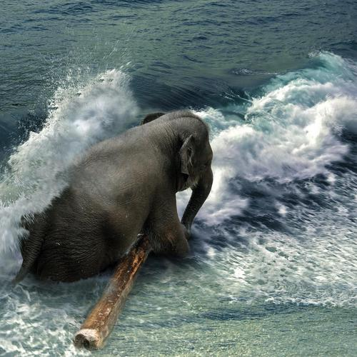 Elephant sitting on the beach wallpaper