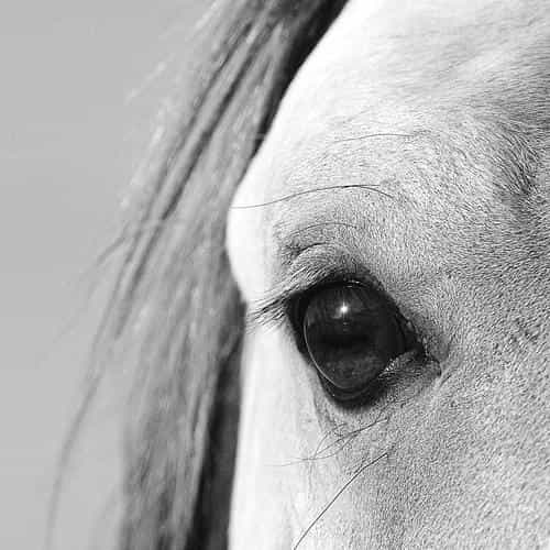 eye of peace b horse