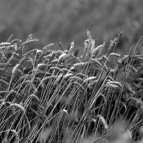 fall grass nature flower bw dark