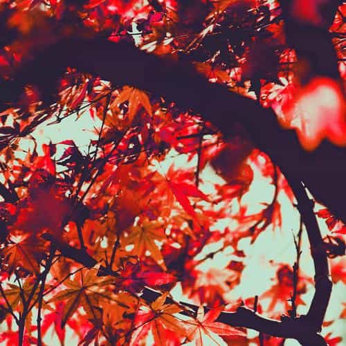 fall tree leaf autumn nature mountain red