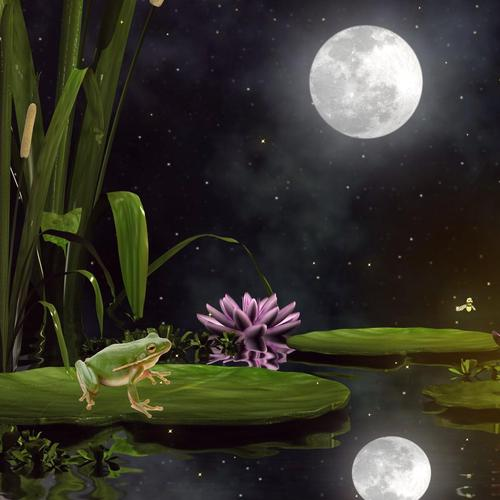 Fancy frog in night collage wallpaper