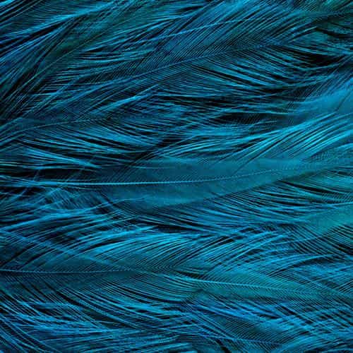 feather blue bird texture pattern