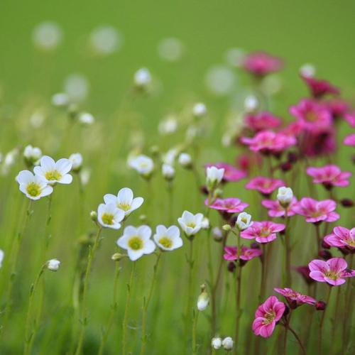 Field Flowers Nature Bokeh wallpaper