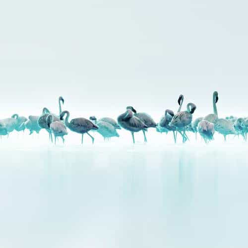flamingos blue peace animal nature birds