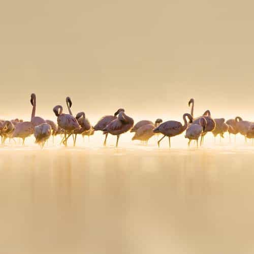 flamingos peace animal nature birds