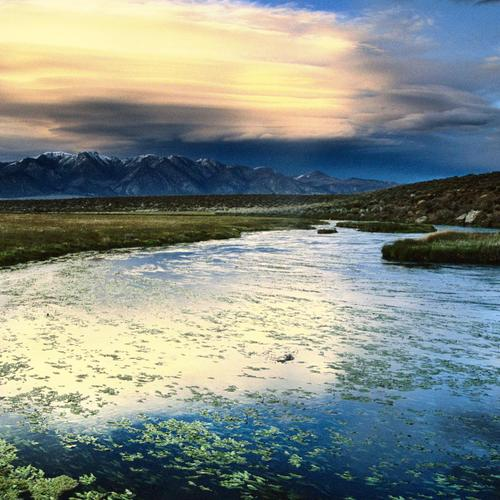 Floating leaves Owens Valley California wallpaper
