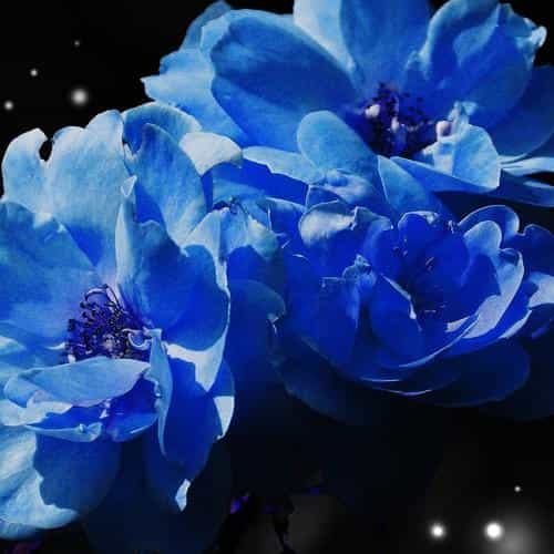 flower blue snow nature art