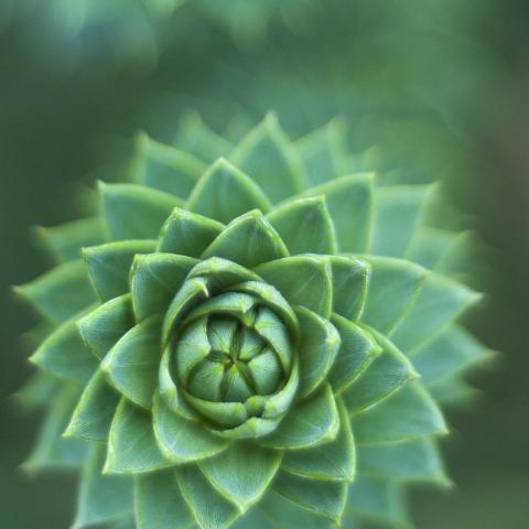 flower green nature
