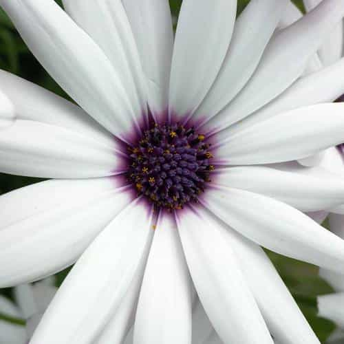 flower purple white spring nature