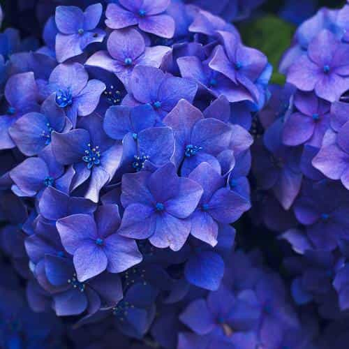 flower spring blue purple nature