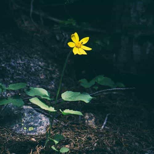 flower yellow forest wood lonely dark nature