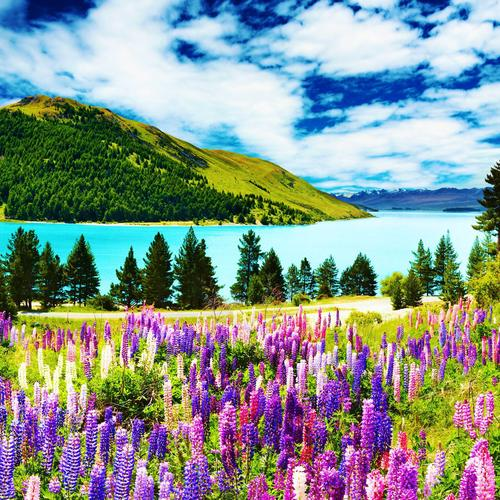 Flowers at lake wallpaper