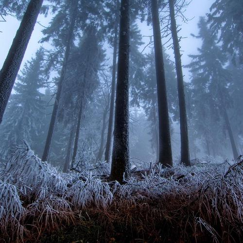 Fog frost in a forest wallpaper