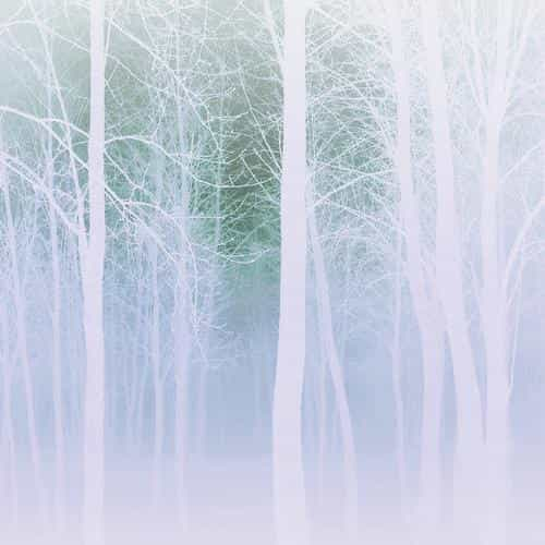 foggy forest white