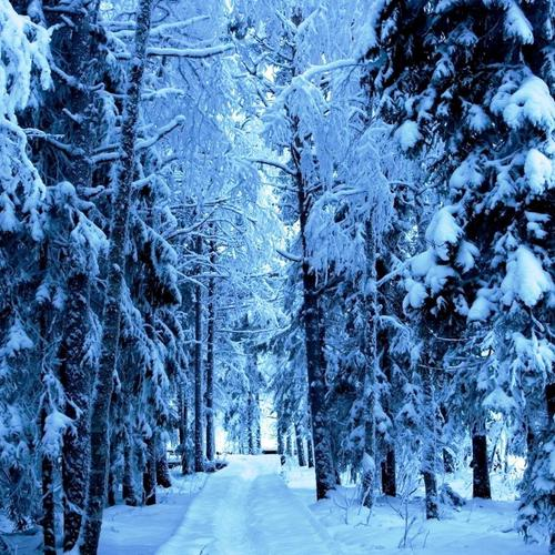 Footpath in snow forest wallpaper