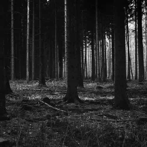 forest dark scary night trees nature