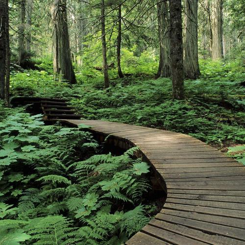Forest Trail In Mount Revelstoke Canada