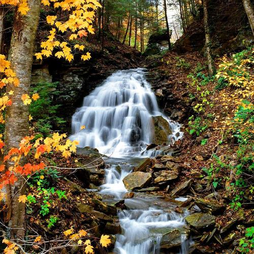 Forest water stream wallpaper