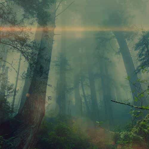 forest wood fog flare nature green
