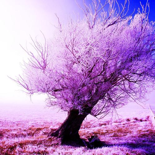 Frosty tree in winter wallpaper