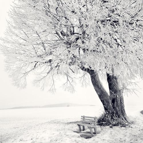 Frozen tree in winter wallpaper