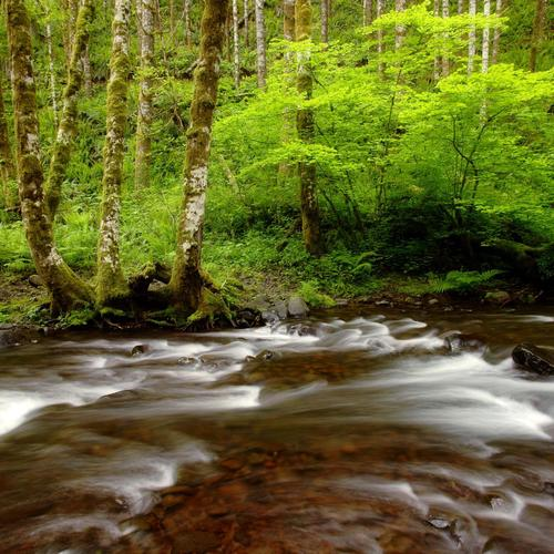 Gales Creek Forest wallpaper