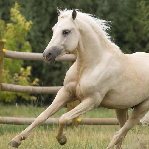 Galloping white horse wallpaper
