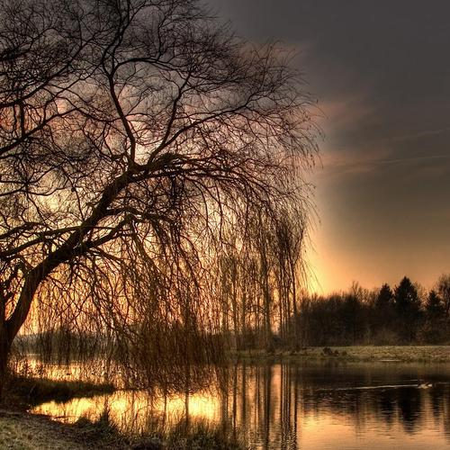 Gloomy willow beside the lake in sunset wallpaper