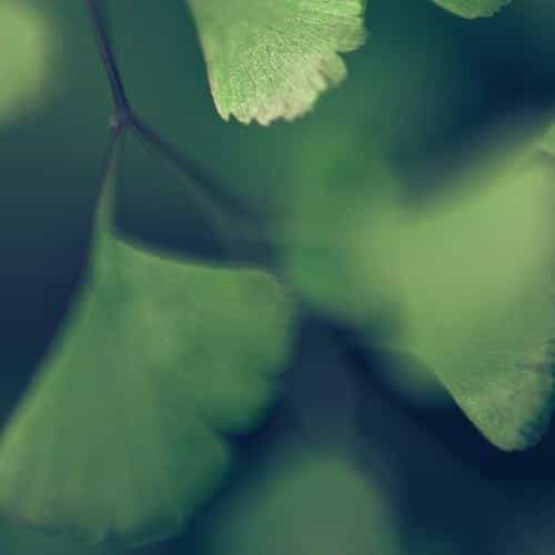 good luck blue clovers leaf nature