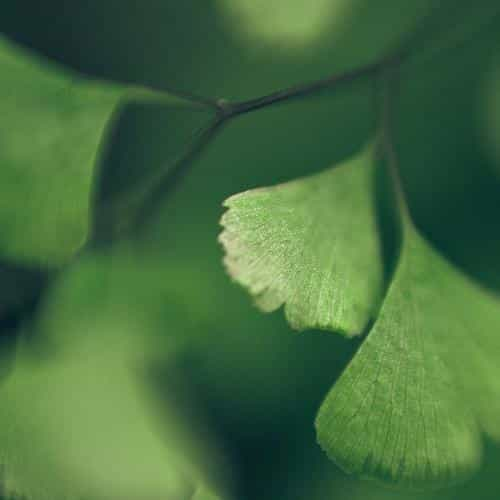 good luck clovers leaf nature