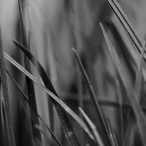 grass dark bw world garden leaf nature