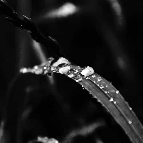 grass drop water rain nature forest dark bw