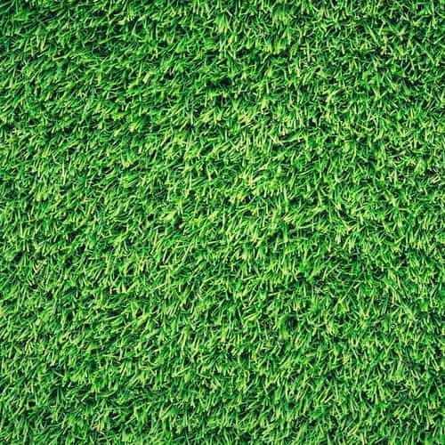 grass green pattern nature