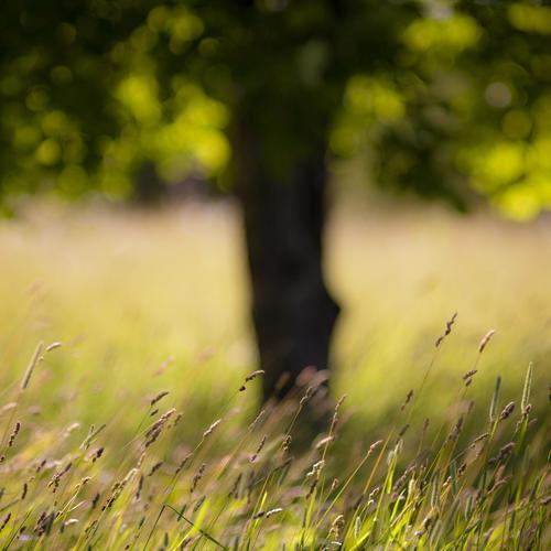 Grass summer close up wallpaper