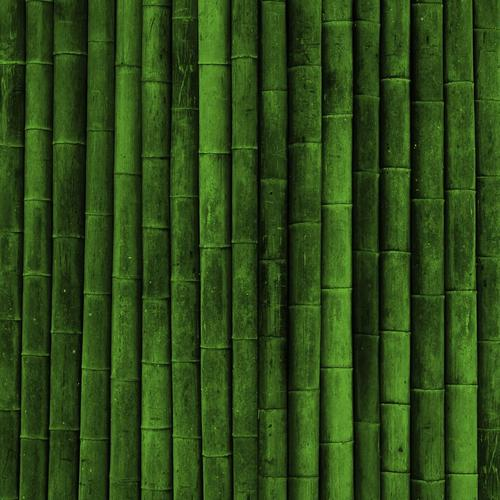 Green bamboo texture wallpaper