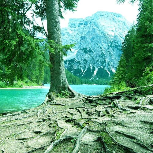 Green Lago Di Braies wallpaper
