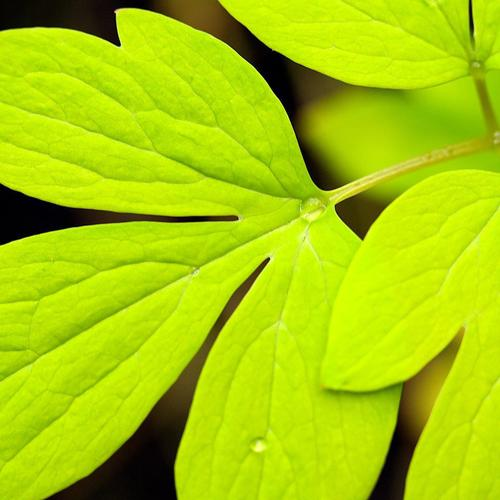 Green Leaf Definition wallpaper