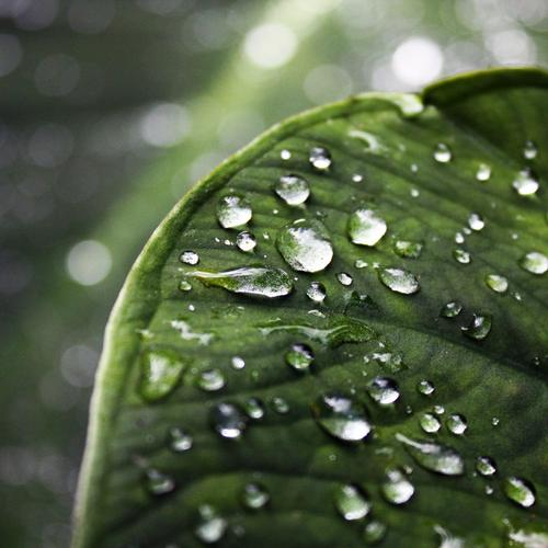 Green Leaf Water Drops Depth Field Gallery wallpaper