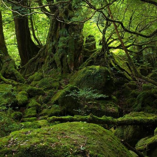 Green moss in mystic forest