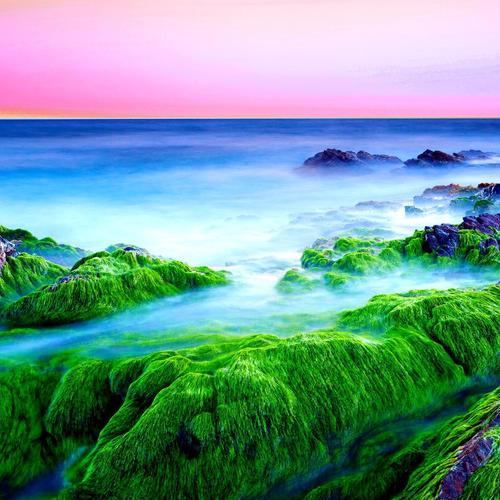 Green seashore at dawn