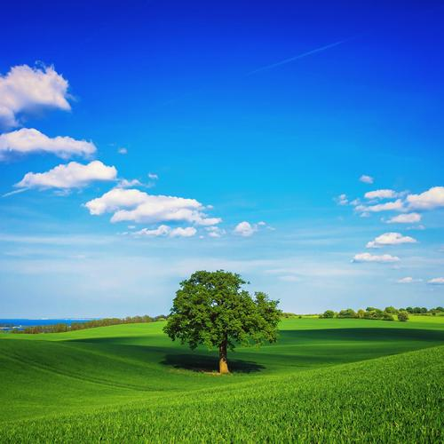 Green tree lonely in green field