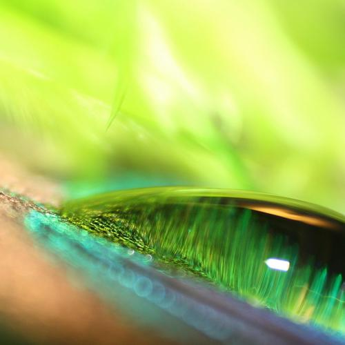Green water drop macro wallpaper