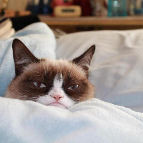 Grumpy cat on the bed
