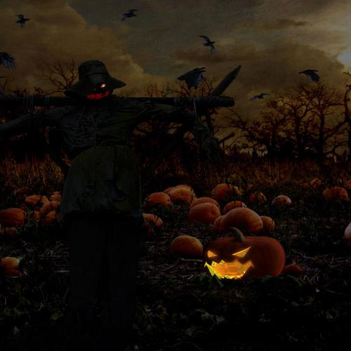 Halloween Pumpkin field wallpaper