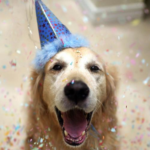 Happy celebrating dog
