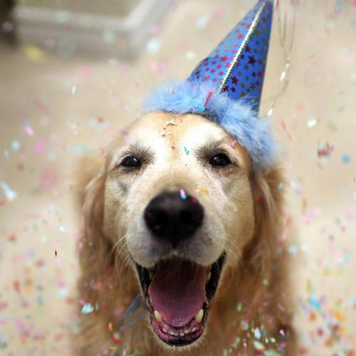Happy dog celebrates the New Year